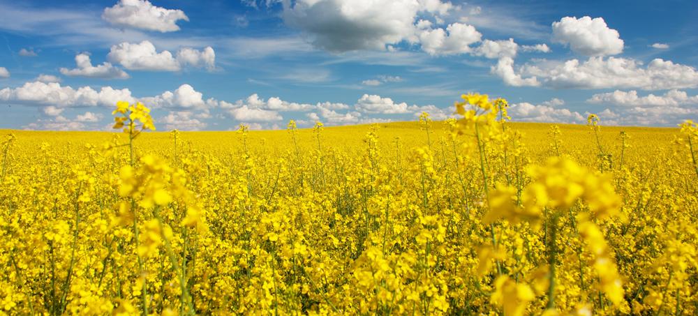 نتیجه تصویری برای درباره مهندسی کشاورزی